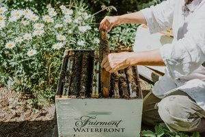 Fairmont-Waterfront-Bee Hive-Bee-Keeper